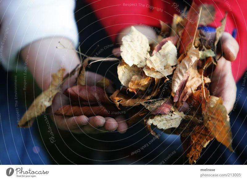 helfende Hände ... Natur Hand blau weiß rot Freude Blatt Herbst Umwelt Bewegung braun Freundschaft Arbeit & Erwerbstätigkeit Freizeit & Hobby Zusammensein Arme