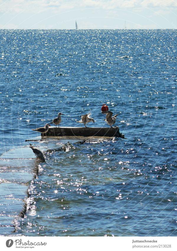 Der schönste Platz... Meer blau Sommer Tier Ferne Vogel glänzend Umwelt Horizont Tiergruppe Flügel Schwimmen & Baden Unendlichkeit Idylle Wildtier Steg