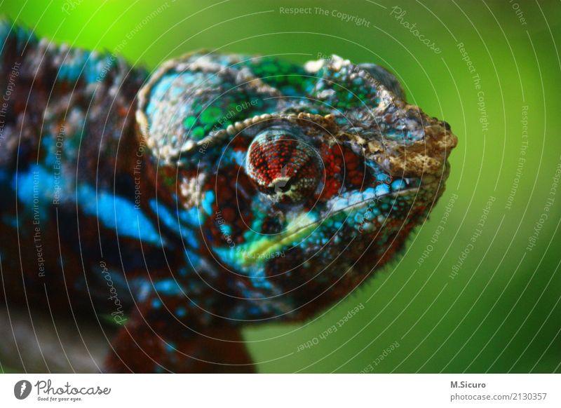 was guckst du Klima Urwald Tier Tiergesicht Schuppen Zoo 1 Tiergruppe elegant exotisch Interesse Abenteuer Farbfoto Tag Unschärfe Tierporträt