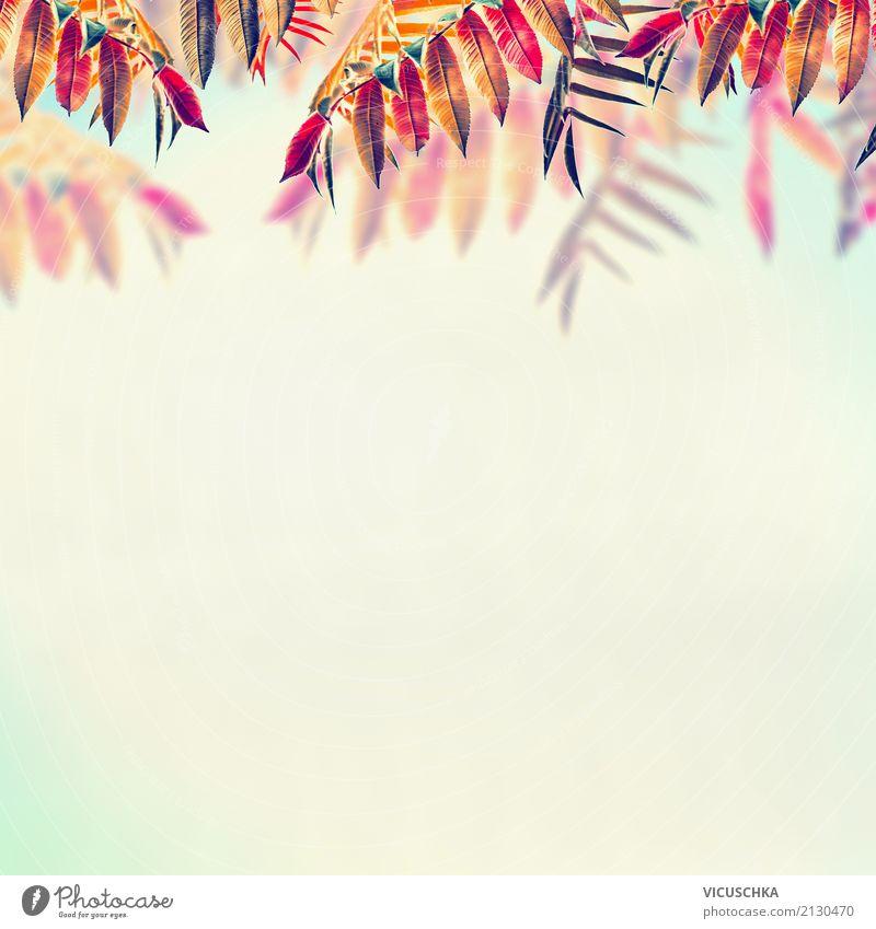Schöne Herbst Hintergrund mit buntem Laub Himmel Natur Pflanze Sommer Baum Blatt gelb Lifestyle Hintergrundbild Garten Design Park Sträucher Schönes Wetter