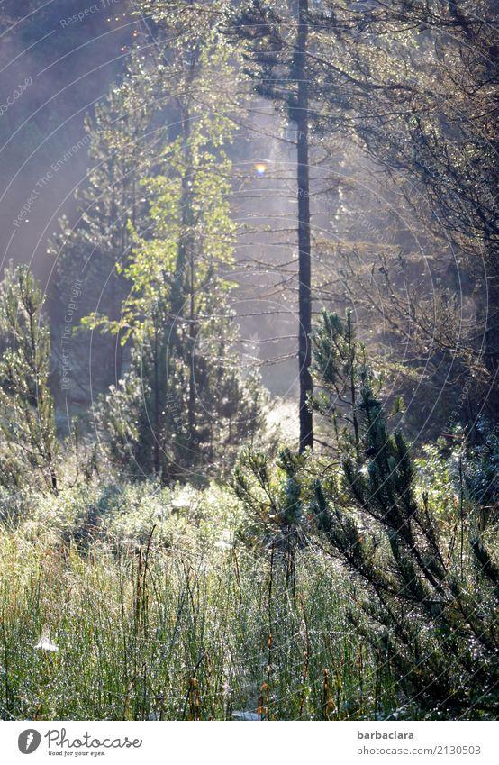 Morgenstunde im Moor Natur Landschaft Pflanze Wassertropfen Sonne Sommer Schönes Wetter Nebel Wiese Wald Schwarzwald Spinnennetz leuchten fantastisch hell