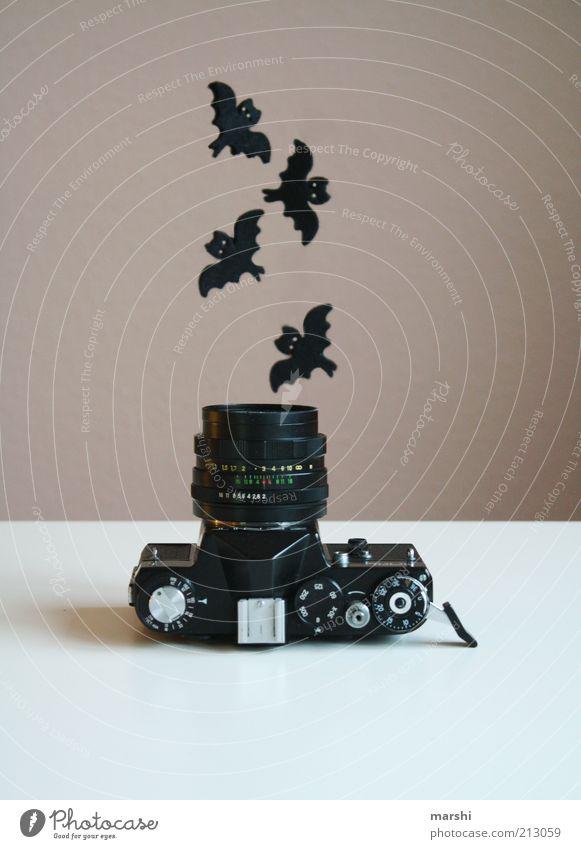 Gruseltag alt Tier dunkel Fliege fliegen Freizeit & Hobby Fotokamera analog gruselig Fotografieren Objektiv Collage flattern geisterhaft Fledermäuse