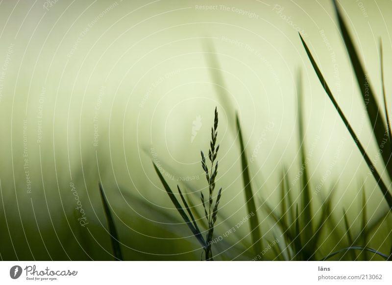 hÖrstDuEs Natur grün Pflanze Wiese Gras Wachstum Halm Inspiration Schatten