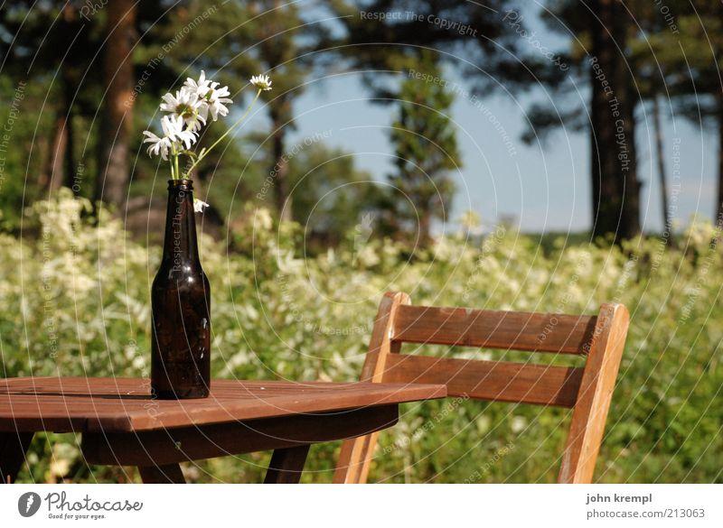 jag älskar sverige! Natur Baum Blume Pflanze Wald Wiese Blüte Garten Glück Holz Park Landschaft Feste & Feiern sitzen Tisch Fröhlichkeit