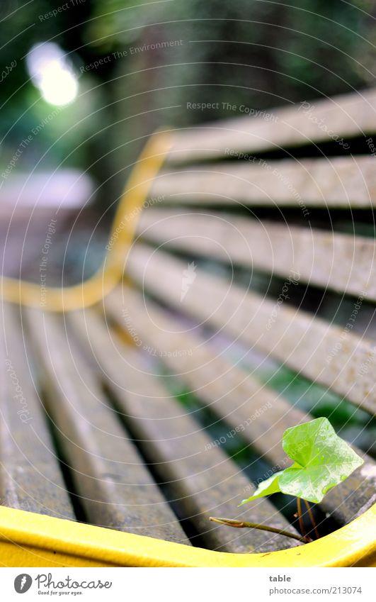 Sitzecke Natur alt grün Pflanze Blatt Einsamkeit gelb Holz grau Park braun Metall Umwelt frei leer Wachstum