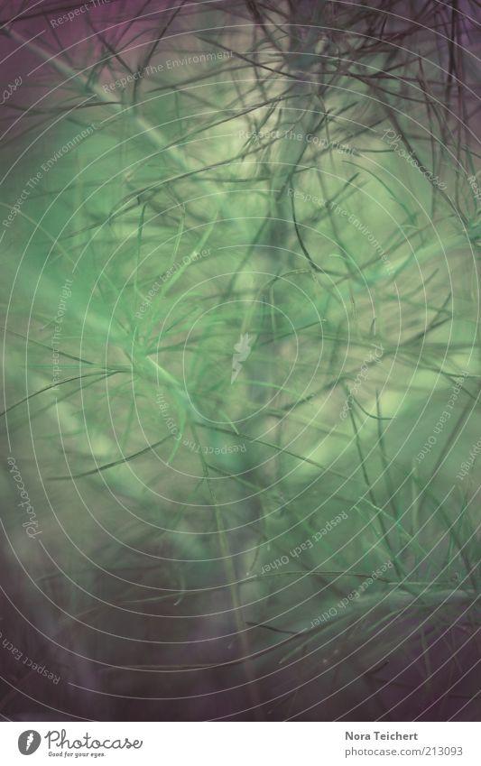 ... Umwelt Natur Pflanze Herbst Sträucher Grünpflanze Wachstum ästhetisch schön nah grün Gefühle Stimmung Farbfoto Gedeckte Farben Außenaufnahme Nahaufnahme