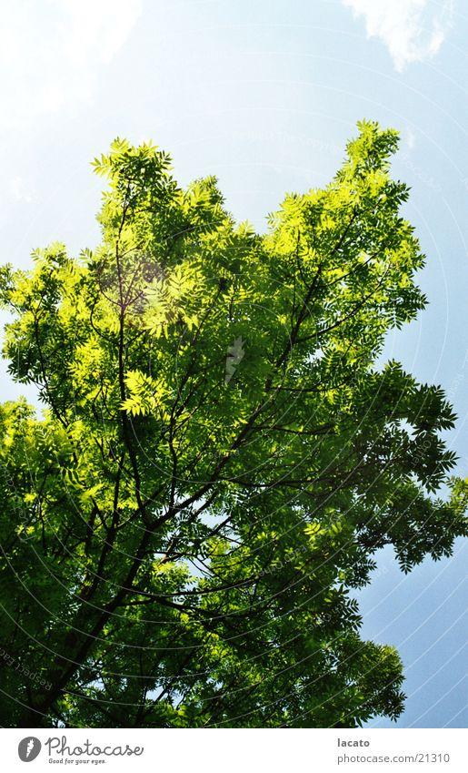 Baum Sommer Himmel Natur