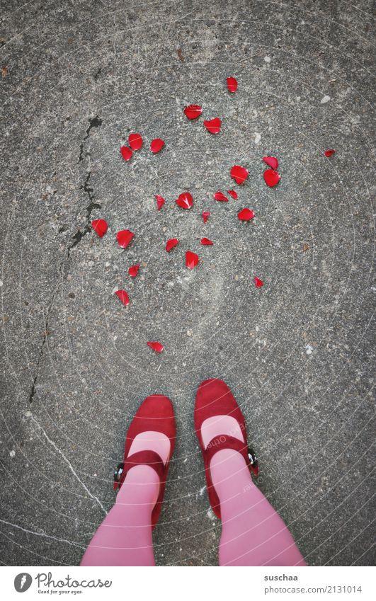 the end of the romance (3) Blume rot Straße Gefühle Fuß Zusammensein Schuhe Hochzeit Rose Asphalt Wut Partnerschaft Konflikt & Streit Strümpfe Blütenblatt