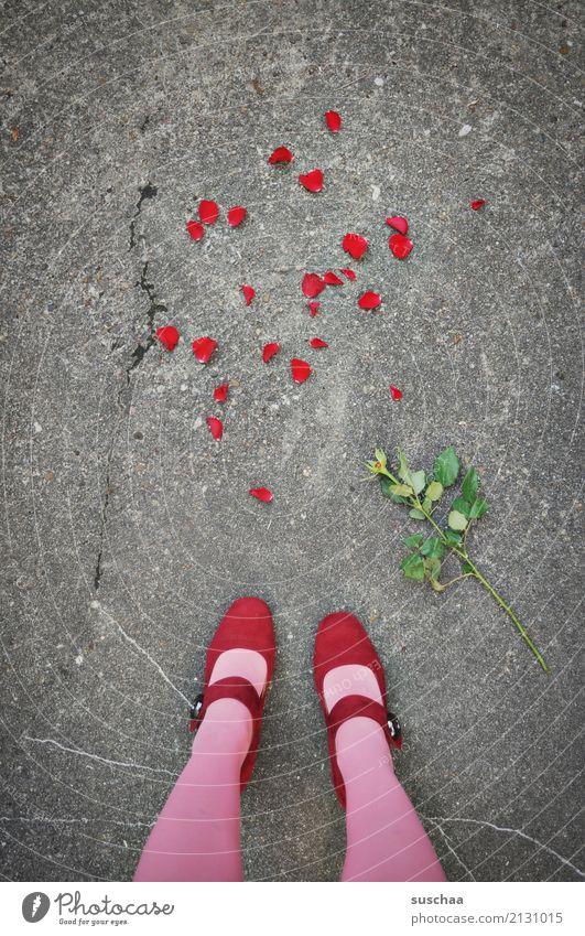 the end of the romance (2) Blume Rose Blütenblatt Blumenstengel Verehrer weggeworfen Konflikt & Streit Liebeskummer Beziehungsstress Schluss machen beenden