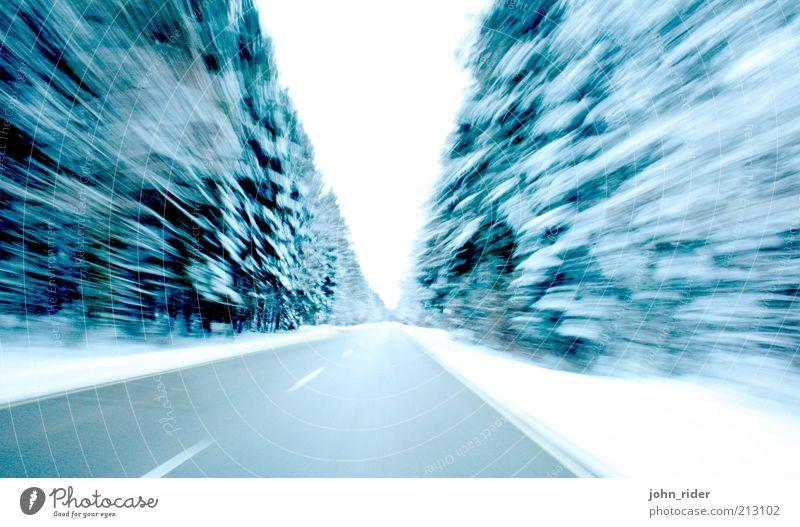 Forst Speed Baum blau Winter Ferne Straße Wald kalt Schnee Bewegung träumen Wege & Pfade Eis Kraft Geschwindigkeit gefährlich Frost