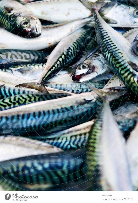 fischig Natur Tier Ernährung Lebensmittel glänzend natürlich liegen frisch Fisch Tiergruppe viele lecker Bioprodukte Handel Nutztier