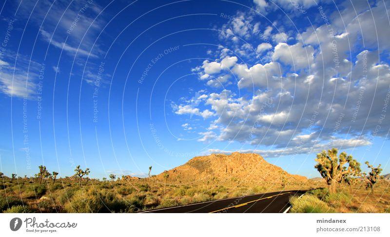 joshua tree wolken Natur Himmel blau Ferien & Urlaub & Reisen ruhig Wolken Einsamkeit Ferne Straße Freiheit Wege & Pfade Landschaft braun Erde Felsen Wüste