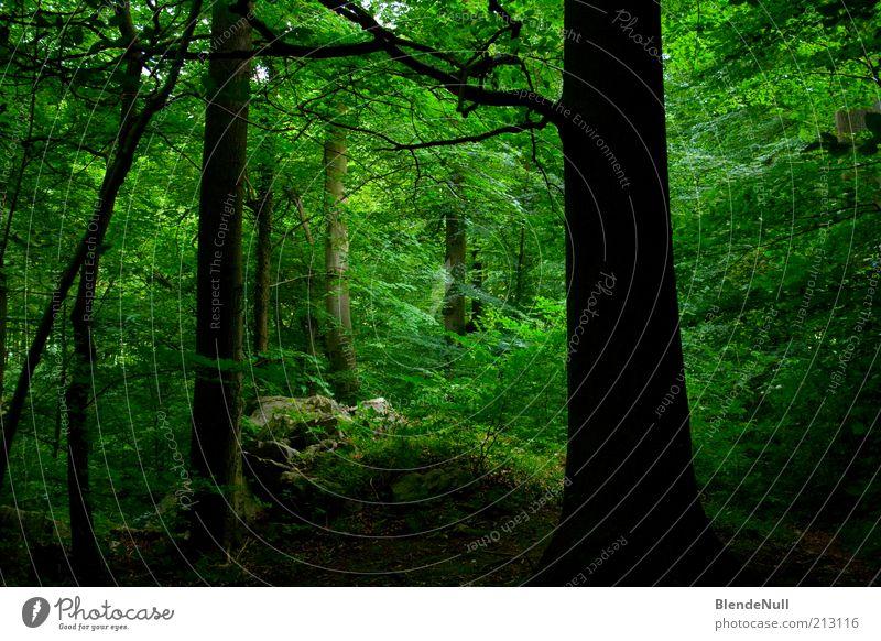 Grüne Hölle Natur grün Baum Pflanze Sommer Blatt Wald Umwelt Leben Holz Gras Frühling Erde natürlich frisch Sträucher