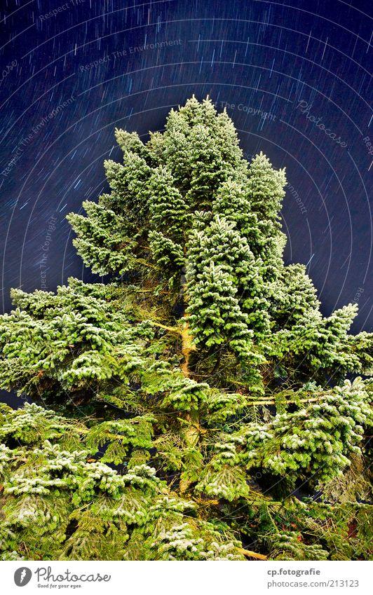 Zeitreise Pflanze Wolkenloser Himmel Nachthimmel Stern Sommer Schönes Wetter Baum Vergänglichkeit Langzeitbelichtung Tanne Tannenzweig Menschenleer Natur
