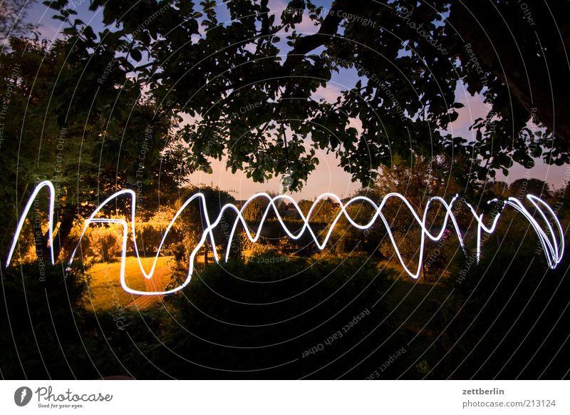 Lichtwelle Spielen Garten Lampe Natur Baum Park Bewegung August Lichtspiel Linie Wellenlinie Taschenlampe Himmel Baumkrone Ast Langzeitbelichtung signalisieren