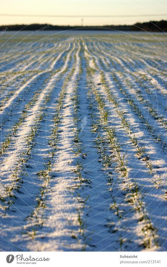 Winteracker Natur blau weiß schön Pflanze Umwelt Landschaft Schnee Wege & Pfade Horizont Eis Erde Wetter Feld Klima