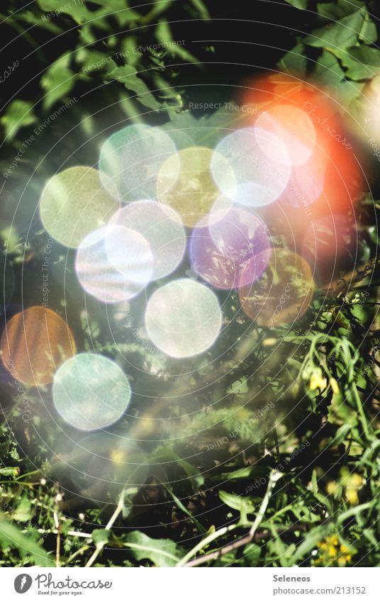 bubble bokeh Sommer Umwelt Natur Pflanze Blume Gras Wiese glänzend retro rund mehrfarbig Unschärfe Farbfoto Außenaufnahme Tag Licht Schatten Kontrast