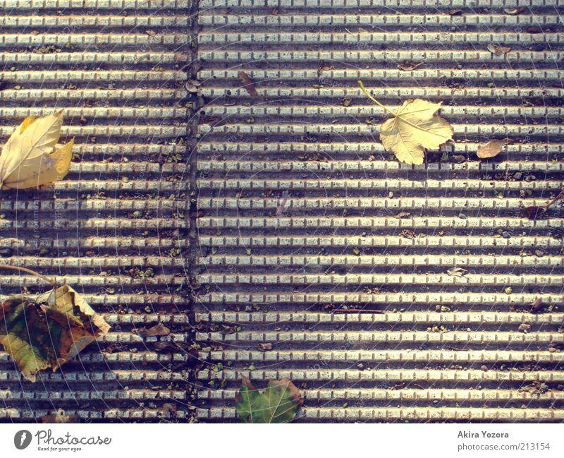 Goldener Herbst Blatt alt Erholung fallen genießen liegen dehydrieren frei unten Wärme gelb grau grün Endzeitstimmung Freiheit Natur Wandel & Veränderung