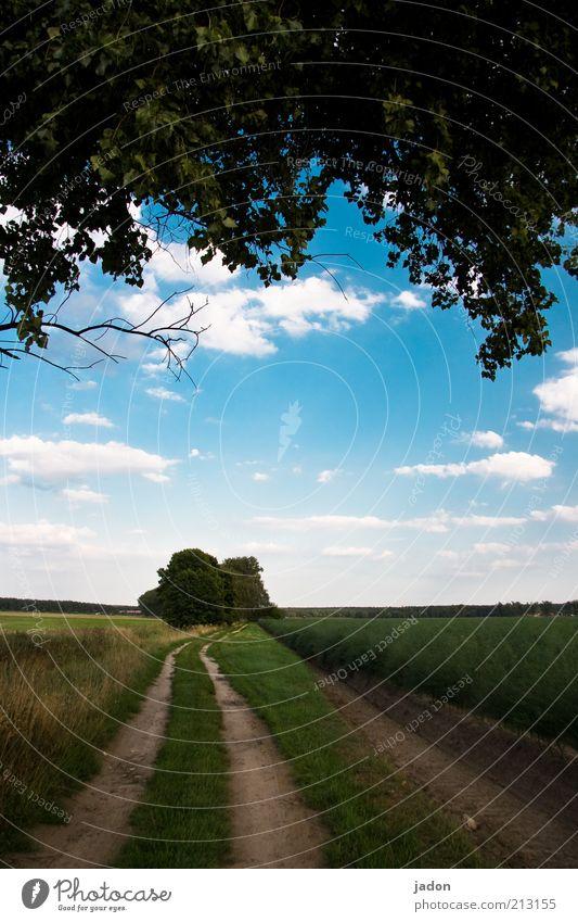 wege. Erde Feld Wege & Pfade Unendlichkeit lang Umwelt Kurve Fußweg Himmel Wolken Textfreiraum Mitte Blauer Himmel Gras Landschaft Natur Menschenleer