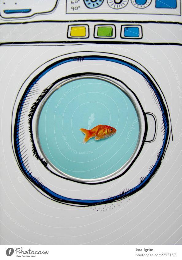 Gleich geht's rund! weiß blau Tier lustig Fisch Schwimmen & Baden Grafik u. Illustration Kreativität skurril Idee bizarr Aquarium Technik & Technologie Waschmaschine Zeichnung Überleben