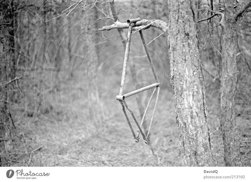 altes eisen Natur Baum Wald Umwelt Wandel & Veränderung Vergänglichkeit Verfall skurril Baumstamm hängen Fahrradausstattung Fahrradrahmen vergessen baumeln