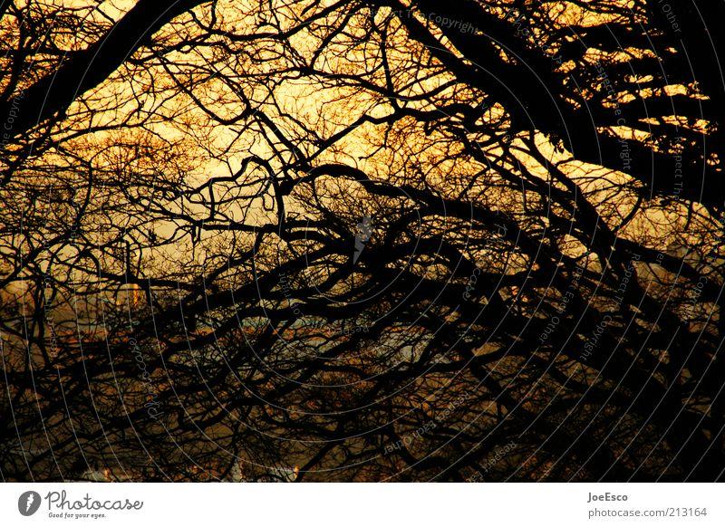 genie und wahnsinn Freiheit Natur Pflanze Sonnenaufgang Sonnenuntergang Sonnenlicht Baum bedrohlich dunkel Unendlichkeit rebellisch verrückt Wärme wild