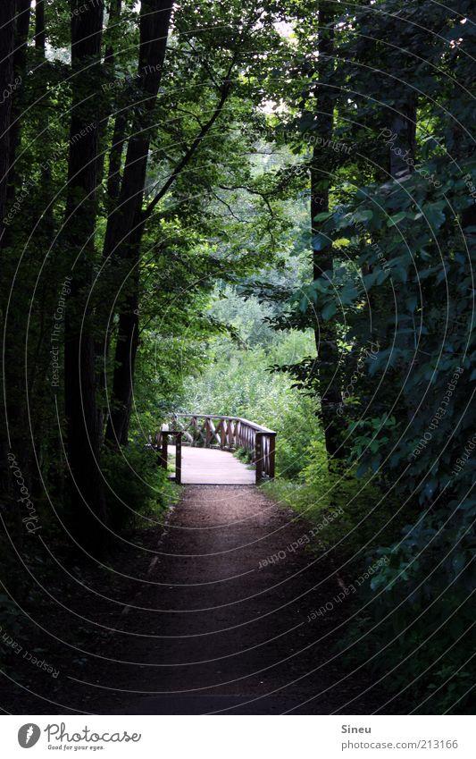 Seeweg Natur Baum Pflanze ruhig Wald Erholung Wege & Pfade Umwelt Brücke Idylle Fußweg Moos Menschenleer