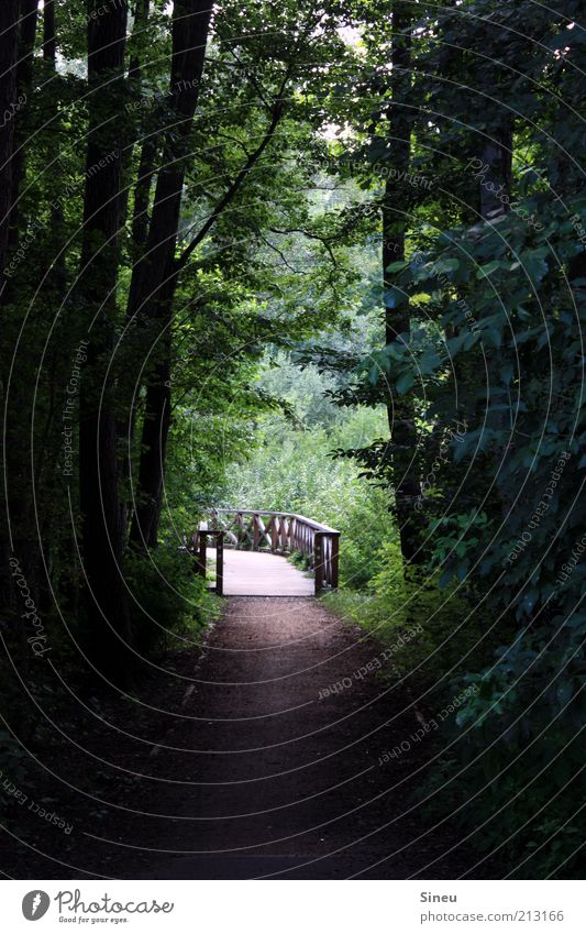 Seeweg Umwelt Natur Pflanze Baum Moos Wald Brücke ruhig Erholung Idylle Farbfoto Außenaufnahme Menschenleer Textfreiraum links Textfreiraum rechts