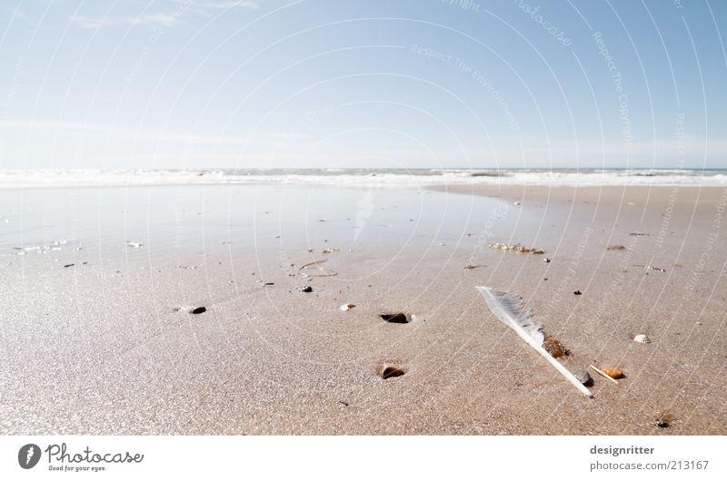 Ende der Welt Ferien & Urlaub & Reisen Tourismus Ferne Freiheit Sommer Sommerurlaub Strand Meer Wellen Brandung Strandgut Stein Muschel Muschelschale Feder