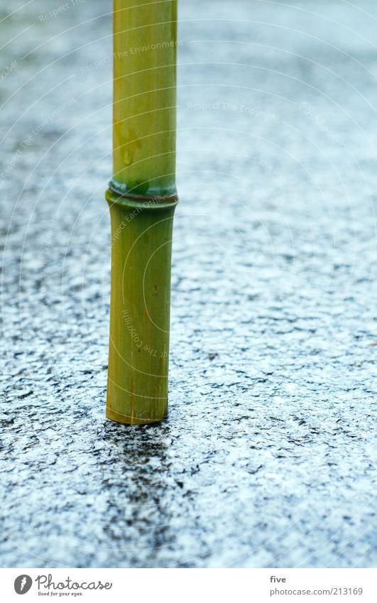 verwurzelt Umwelt Natur Wasser Sommer schlechtes Wetter Regen Pflanze Wildpflanze exotisch Bambus Bambusrohr stehen Wachstum dünn nass natürlich rund grün Boden