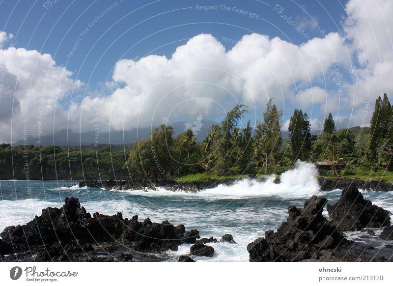 Brandung Umwelt Natur Landschaft Wasser Himmel Sommer Schönes Wetter Wind Baum Wellen Küste Bucht Meer Pazifik Insel Maui Lavastrand wild Energie Farbfoto