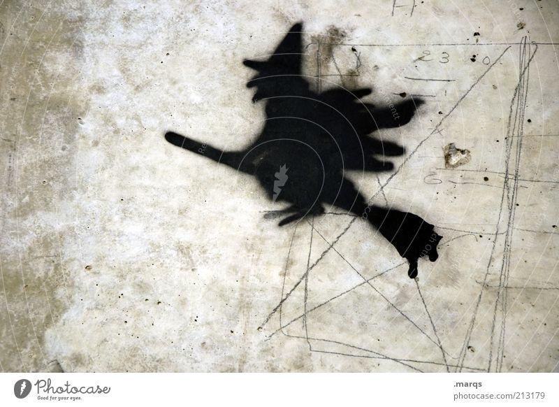 Witch hunt Wand Mauer Graffiti fliegen Beton Zeichen Geister u. Gespenster mystisch Märchen Zauberei u. Magie Halloween Besen Textfreiraum Hexe Betonwand