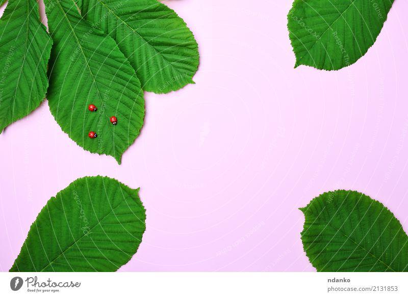 rosa Hintergrund mit grünen Blättern Natur Pflanze Tier Blatt hell klein natürlich rot Farbe Marienkäfer Wanze Insekt Tierwelt Kastanie Farbfoto Nahaufnahme