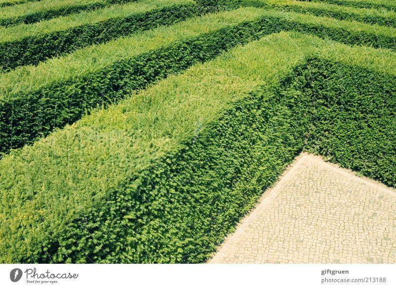 ecken & kanten Pflanze Blatt Garten Park Ordnung Wachstum Ecke Sträucher Reihe Kopfsteinpflaster parallel Symmetrie gerade Bildausschnitt Hecke Grünpflanze