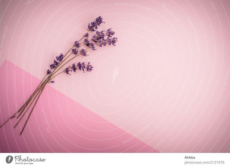 Lavendel-Dekoration schön Liebe Gesundheit Hintergrundbild rosa Zusammensein Freundschaft Zufriedenheit Dekoration & Verzierung ästhetisch Blühend Lebensfreude