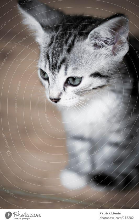 sad kitty schön Tier Katze Stimmung sitzen authentisch weich Tiergesicht Fell niedlich Haustier Gefühle Tierliebe