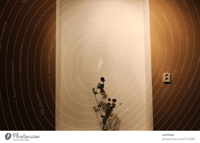 Steck an bitte! schön alt weiß Pflanze schwarz Wand Fenster Blüte Mauer Zufriedenheit braun Rose Dekoration & Verzierung einzigartig Duft trocken