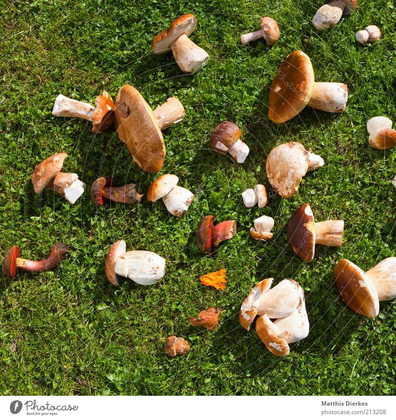 Pilze Lebensmittel Ernährung Bioprodukte Vegetarische Ernährung ästhetisch Steinpilze Hallimasch Ernte Sammlung Farbfoto Außenaufnahme Menschenleer Tag