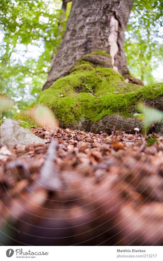 Baum Natur grün Sommer Wald Herbst grau braun Umwelt ästhetisch Klima natürlich Baumstamm Moos Schönes Wetter Klimawandel