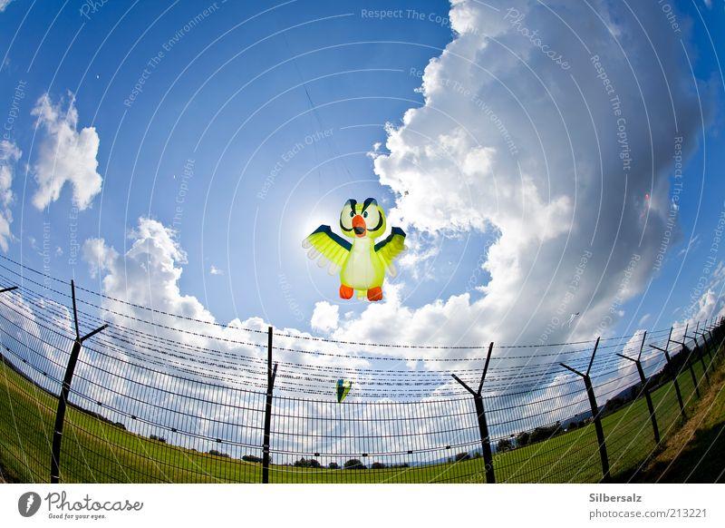 Die Angst der Eule vor der Landung Bewegung Vogel fliegen Freizeit & Hobby Flügel außergewöhnlich Schönes Wetter Schweben Lenkdrachen Flughafen Weitwinkel