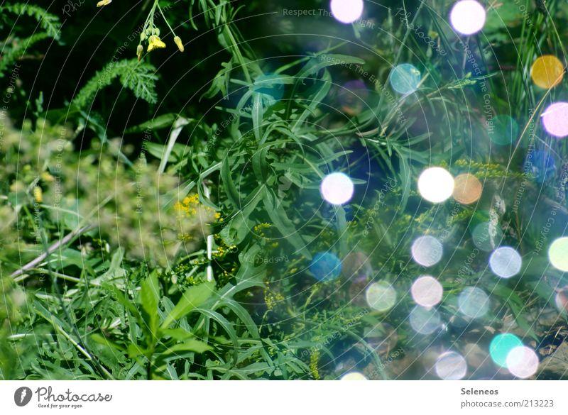 bubble bokeh II Natur Pflanze Sommer Gras glänzend Umwelt leuchten Seifenblase Lichtspiel Lichtbrechung Lichtpunkt Glanzlicht Farbfleck