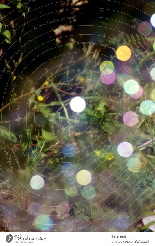 bubble bokeh III Natur Blume Pflanze Sommer glänzend Hintergrundbild Umwelt Seifenblase Lichtspiel Lichtpunkt Glanzlicht Farbfleck Beleuchtung spektral