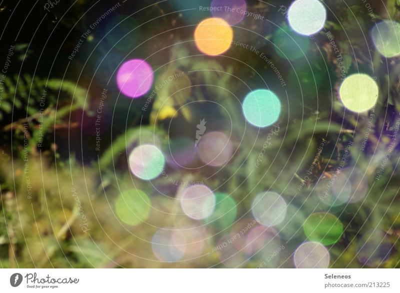 bubble bokeh IV Natur Pflanze Gras glänzend Umwelt retro rund Seifenblase Lichtspiel Lichtpunkt Glanzlicht Farbfleck spektral Farbenspiel