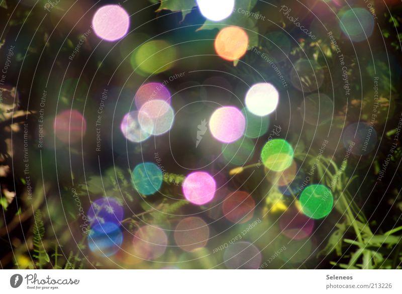 bubble bokeh V Sommer Umwelt Natur Pflanze Klima Gras Seifenblase glänzend retro rund mehrfarbig Farbfoto Außenaufnahme Tag Licht Schatten Kontrast