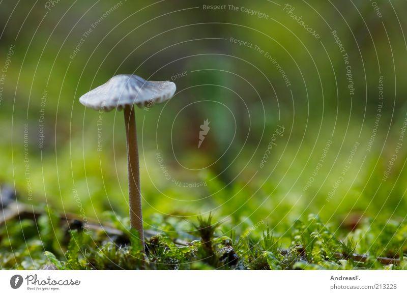 Ein Männlein steht im Walde... Natur grün Pflanze Umwelt Herbst Gras braun Erde stehen Pilz Moos Waldboden Pilzhut