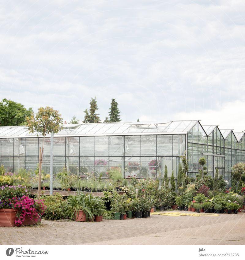 Gärtnerei Baum Blume Pflanze Gebäude Sträucher Sauberkeit Unternehmen Handel Gewächshaus Landwirtschaft Topfpflanze Gärtnerei Mittelstand