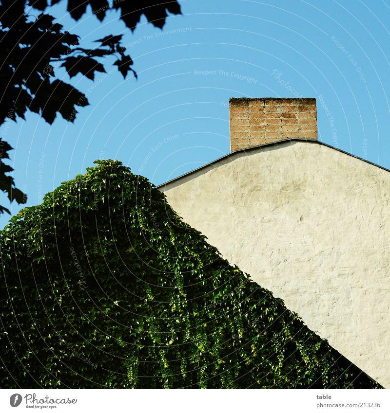 Tarnung Haus Umwelt Natur Pflanze Grünpflanze Mauer Wand Fassade Dach Schornstein alt blau grau grün Wein Ranke Naturwuchs Farbfoto Außenaufnahme Menschenleer