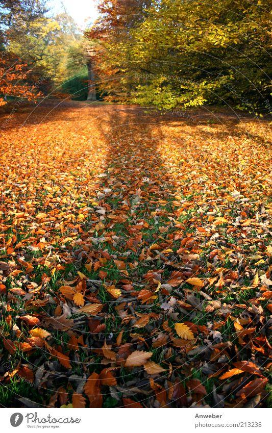 Versuch eines Baumes sich hinterm Fotografen zu verstecken Natur schön Baum grün Pflanze Blatt gelb Wald Erholung Wiese Herbst Freiheit Park Landschaft Stimmung braun