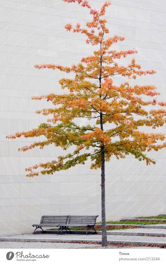 Großstadtherbst Baum Bauwerk Architektur Fassade Bank Herbst Jahreszeiten Holzbank Sitzgelegenheit Laubbaum Blatt Herbstlaub Mauer stagnierend Farbfoto