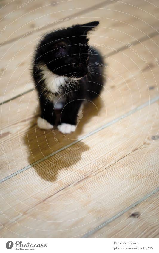 Ich will die Maus! schön schwarz Tier Katze Stimmung klein weich beobachten Neugier niedlich Wachsamkeit Pfote Haustier einzeln Unschärfe